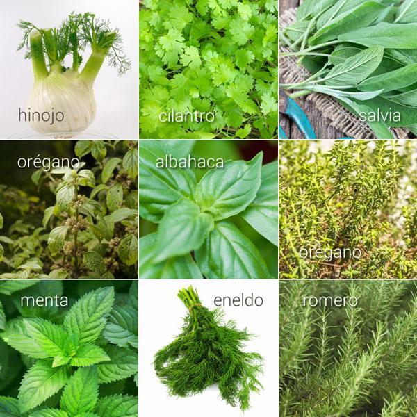 Hierbas aromáticas, sus usos en la cocina